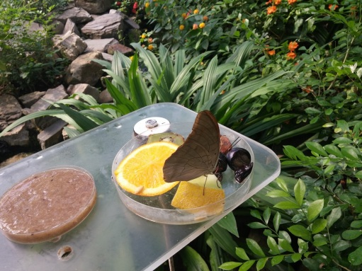 Inside the spectacular Artis butterfly house