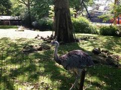 Inside the Artis zoo
